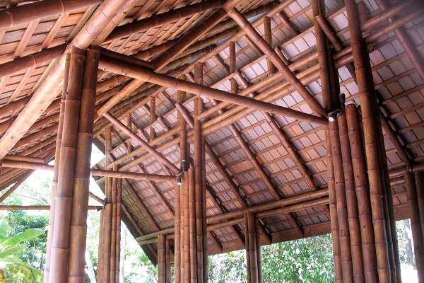 Materia prima bambú - Raw Material bamboo