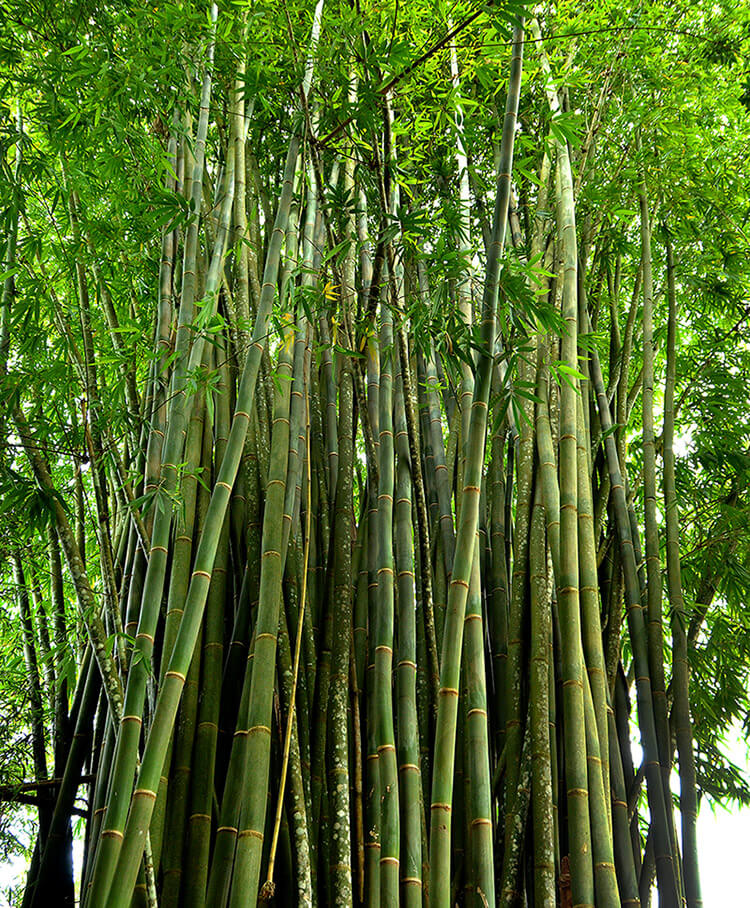 Material de bambú
