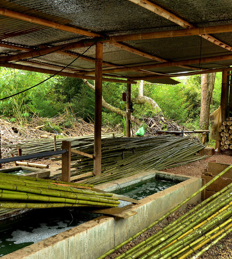Bamboo suppliers - Bamboo planting and utilization