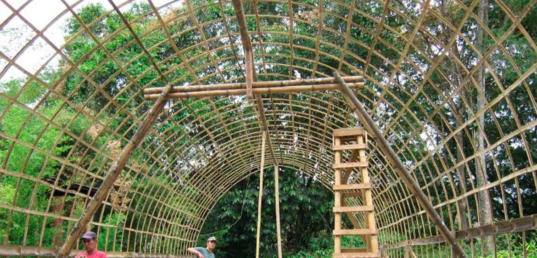 tiras de bambú - bamboo strips